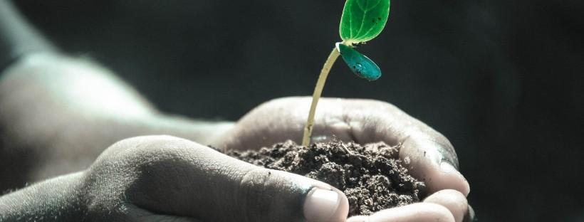 Personnes tendant ses mains avec de la terre et une plante qui pousse